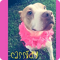 Adopt A Pet :: Cassidy - Fayetteville, NC