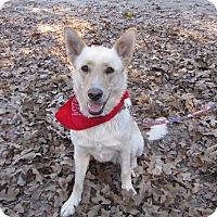 Adopt A Pet :: Baby - Oakland, AR