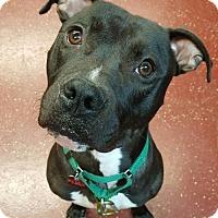Adopt A Pet :: Alaric - Fargo, ND