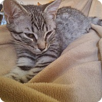 Adopt A Pet :: Henry - Toronto, ON