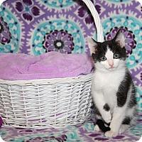 Adopt A Pet :: Darrin - Marietta, OH