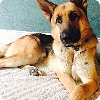 Adopt A Pet :: Gallagher - Houston, TX
