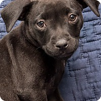 Adopt A Pet :: Baby Pepper - Miami, FL