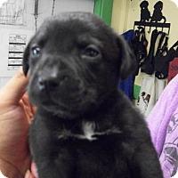 Adopt A Pet :: Ingrid - Picayune, MS