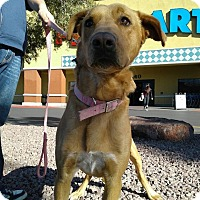 Adopt A Pet :: Hunter - Las Vegas, NV