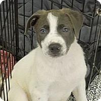 Adopt A Pet :: Selena - Washington, PA
