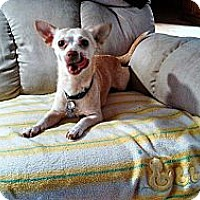 Adopt A Pet :: Tia - Pending, in ME - kennebunkport, ME