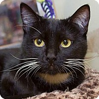 Adopt A Pet :: Evita - Irvine, CA