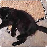 Adopt A Pet :: Moose - Lake Charles, LA