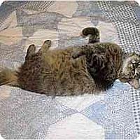 Adopt A Pet :: Suzy Q - Davis, CA