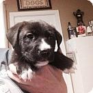 Adopt A Pet :: Mistletoe