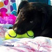 Adopt A Pet :: Hope - El Campo, TX