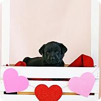 Adopt A Pet :: Jill - Waldorf, MD