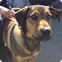 Adopt A Pet :: Jaxx - Grants Pass, OR