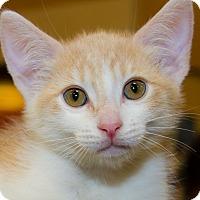 Adopt A Pet :: Wyatt - Irvine, CA
