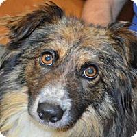 Adopt A Pet :: CASINO - Louisville, KY