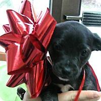 Adopt A Pet :: Sister - Erwin, TN
