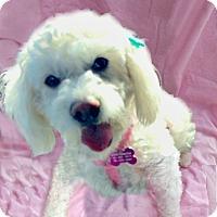 Adopt A Pet :: Candy is very sweet! - Redondo Beach, CA