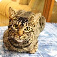 Adopt A Pet :: Maxine - Medina, OH