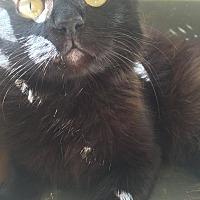 Adopt A Pet :: Po - Everett, WA