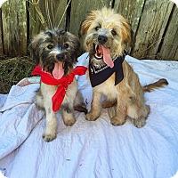 Adopt A Pet :: Ansleigh - Russellville, KY