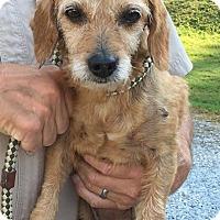 Adopt A Pet :: PIXIE - Cadiz, OH