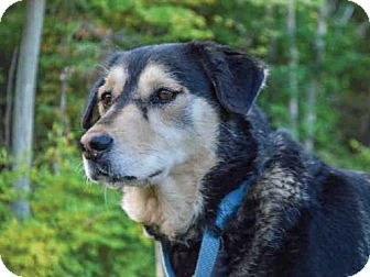 German Shepherd Dog Mix Dog for adoption in Pittsburgh, Pennsylvania - CHLOE