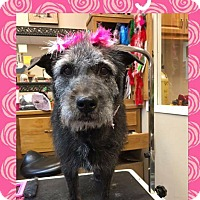 Adopt A Pet :: Flossey - Las Vegas, NV