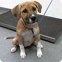 Adopt A Pet :: Kahyla - Maple Grove, MN