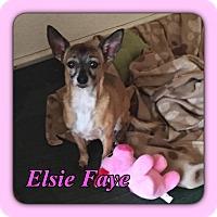Adopt A Pet :: Elsie - Enid, OK