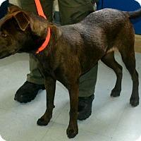 Adopt A Pet :: Chloe - Sharon, CT