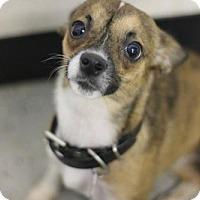 Adopt A Pet :: Tipsy - Phoenix, AZ