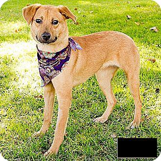 Labrador Retriever Mix Dog for adoption in Encino, California - Charly - Courtesy Post