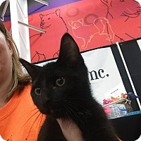 Adopt A Pet :: Black (Name Needed0 - Jerseyville, IL