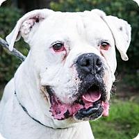Adopt A Pet :: Armando - San Diego, CA