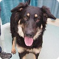 Adopt A Pet :: Liz - Portland, OR