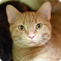 Adopt A Pet :: Amal Jr - St. Paul, MN