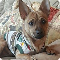 Adopt A Pet :: Chico - Bucks County, PA