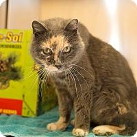 Adopt A Pet :: Anna - Schererville, IN