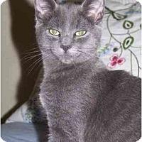 Adopt A Pet :: Sinatra - Davis, CA