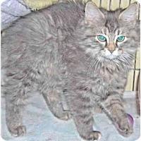 Adopt A Pet :: Tinsel - Colmar, PA