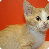 Adopt A Pet :: JEWEL - SILVER SPRING, MD