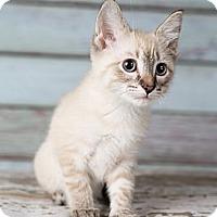 Adopt A Pet :: Aero - Eagan, MN