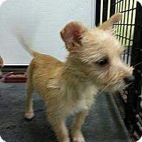 Adopt A Pet :: Gretel - Brattleboro, VT