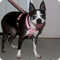 Adopt A Pet :: *Puddin - Winder, GA