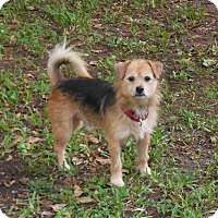 Adopt A Pet :: Coop - Ormond Beach, FL
