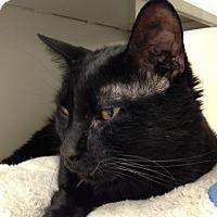 Adopt A Pet :: Alacazam - Gilbert, AZ