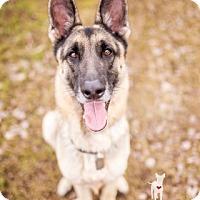 Adopt A Pet :: Rico - Ormond Beach, FL