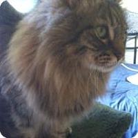 Adopt A Pet :: GA - Booberry (MCR) - Carrollton, GA