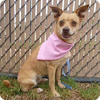 Adopt A Pet :: *JACKIE - Norco, CA